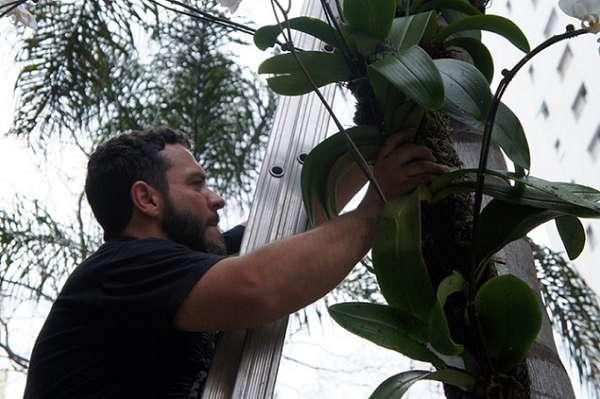 Diego Lahóz Ramos, professor e idealizador do Projeto Orquídeas na Vila, atuante desde 2011 no cultivo e plantação de orquídeas pelo bairro da Vila Madalena e por outras cidades de São Paulo e do Brasil