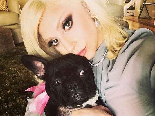 Asia, el bulldog francés de Lady Gaga se ha vuelto su compañaro perfecto para tomarse selfies.