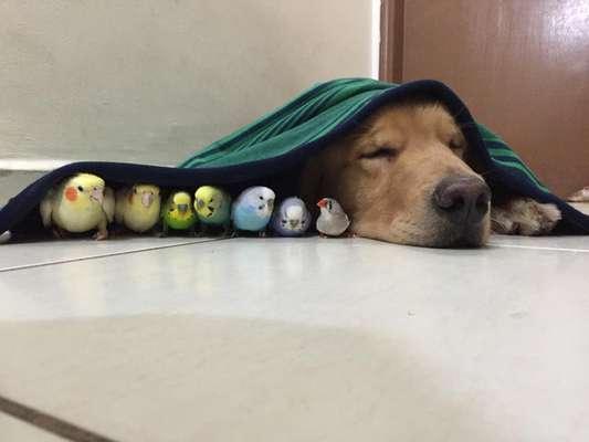 Bob dorme ao lado dos companheiros