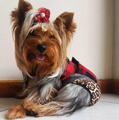 Pets também se destacaram nos Carnavais pelo Brasil