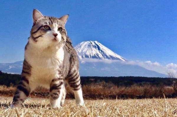Conheça Nyankichi, o gato mais fotogênico do mundo - O gatinho acompanha o dono em viagens pelo Japão e tem um talento natural para sair bem nas fotos, que são compartilhadas com mais de 80 mil seguidores no Instagram.